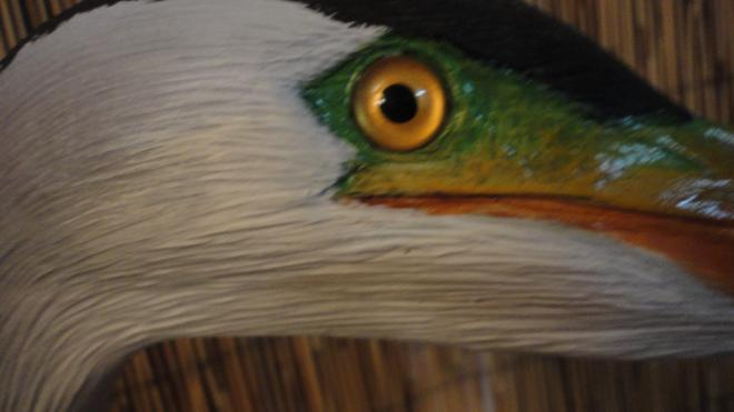 blue heron head close  up